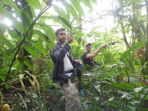 Siguiendo yigüirros en la selva