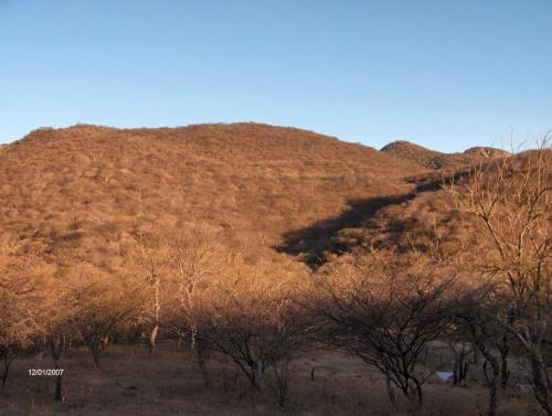 Selva baja caducifolia en época de secas