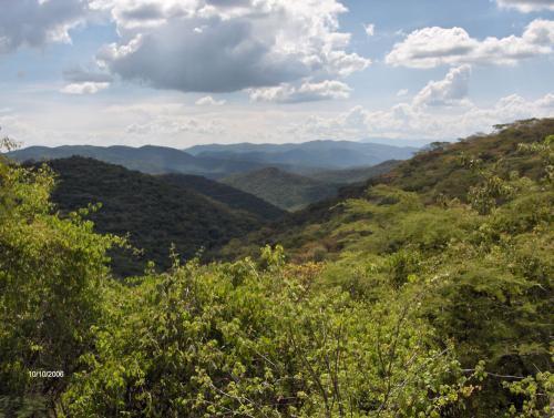 Selva baja caducifolia en época de lluvias
