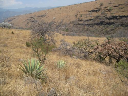 Barranca del río Tembembe (área deforestada)
