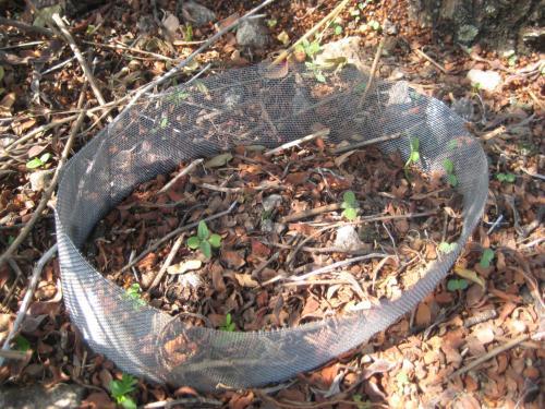 Experimentos de germinación en donde colocamos semillas en campo dentro de la malla para conocer las tasas de germinación